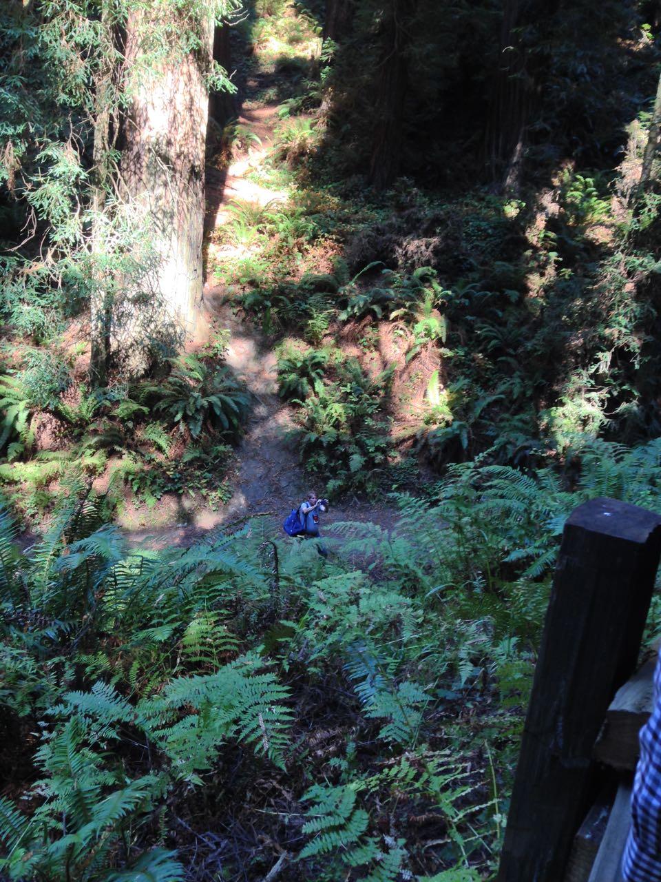 Redwoods 2017 10 01 80 Of 244