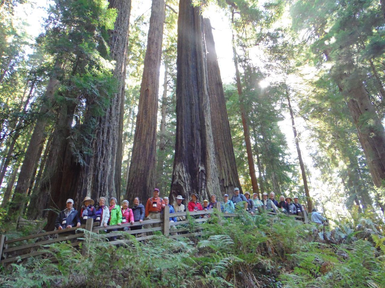 Redwoods 2017 10 01 81 Of 244