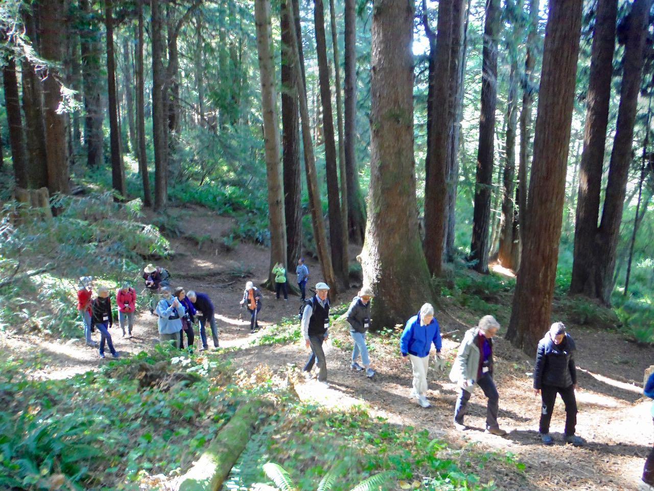 Redwoods 2017 10 01 82 Of 244