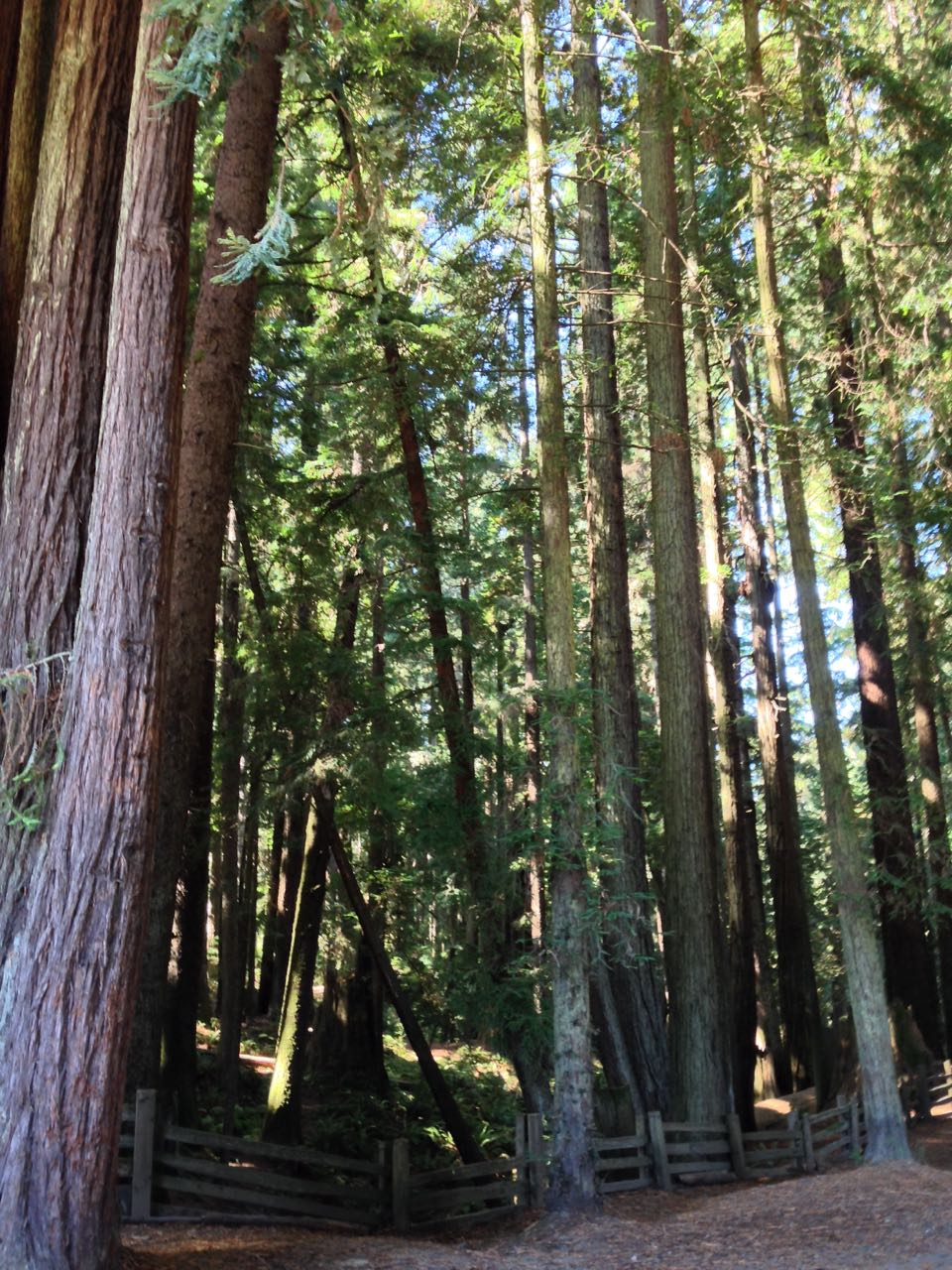 Redwoods 2017 10 01 83 Of 244
