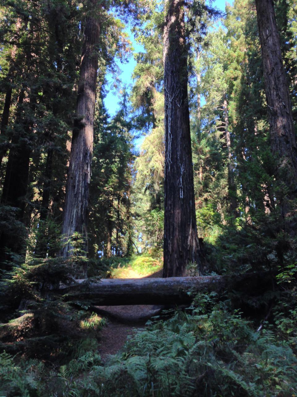 Redwoods 2017 10 01 84 Of 244