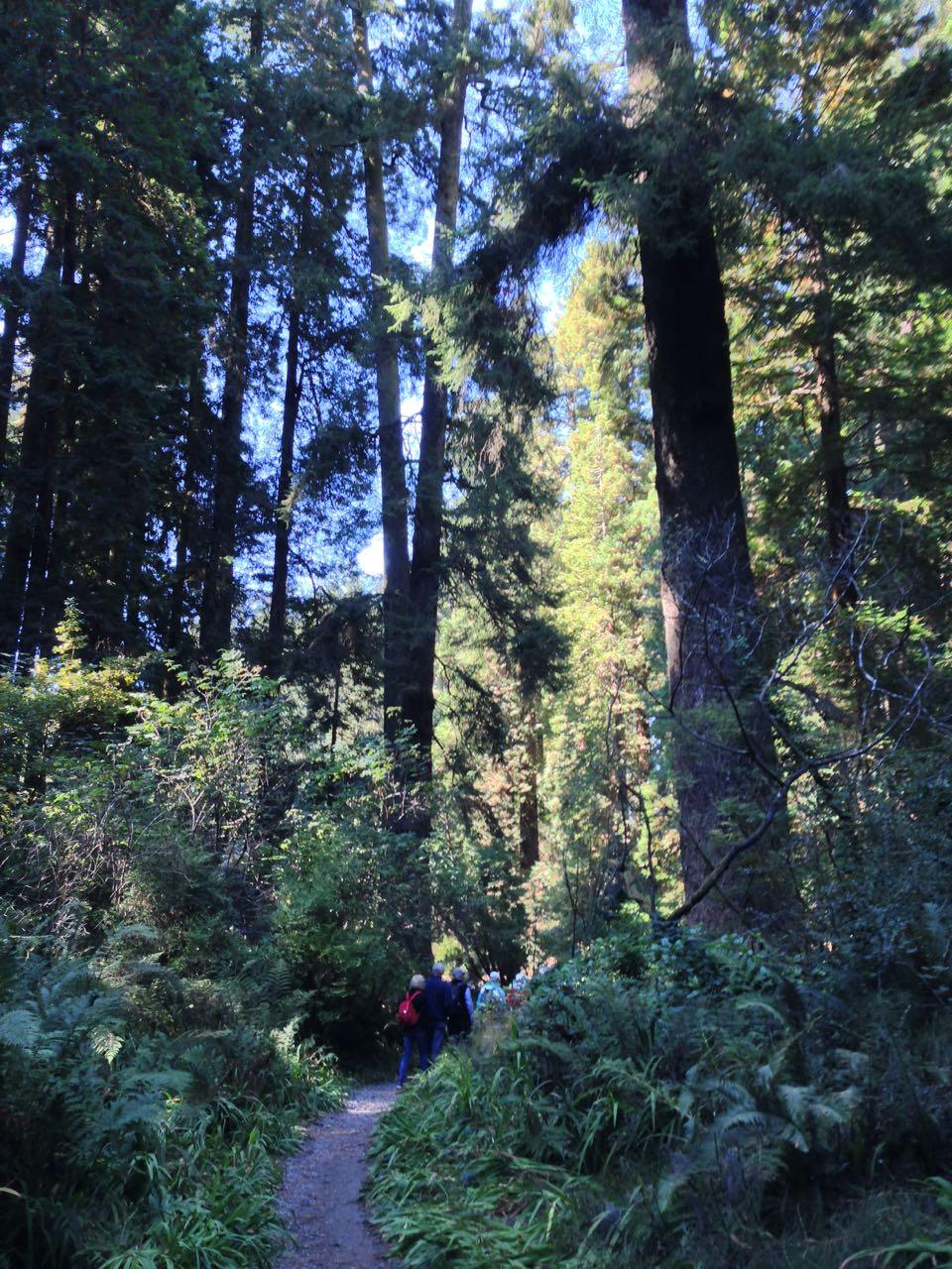 Redwoods 2017 10 01 85 Of 244