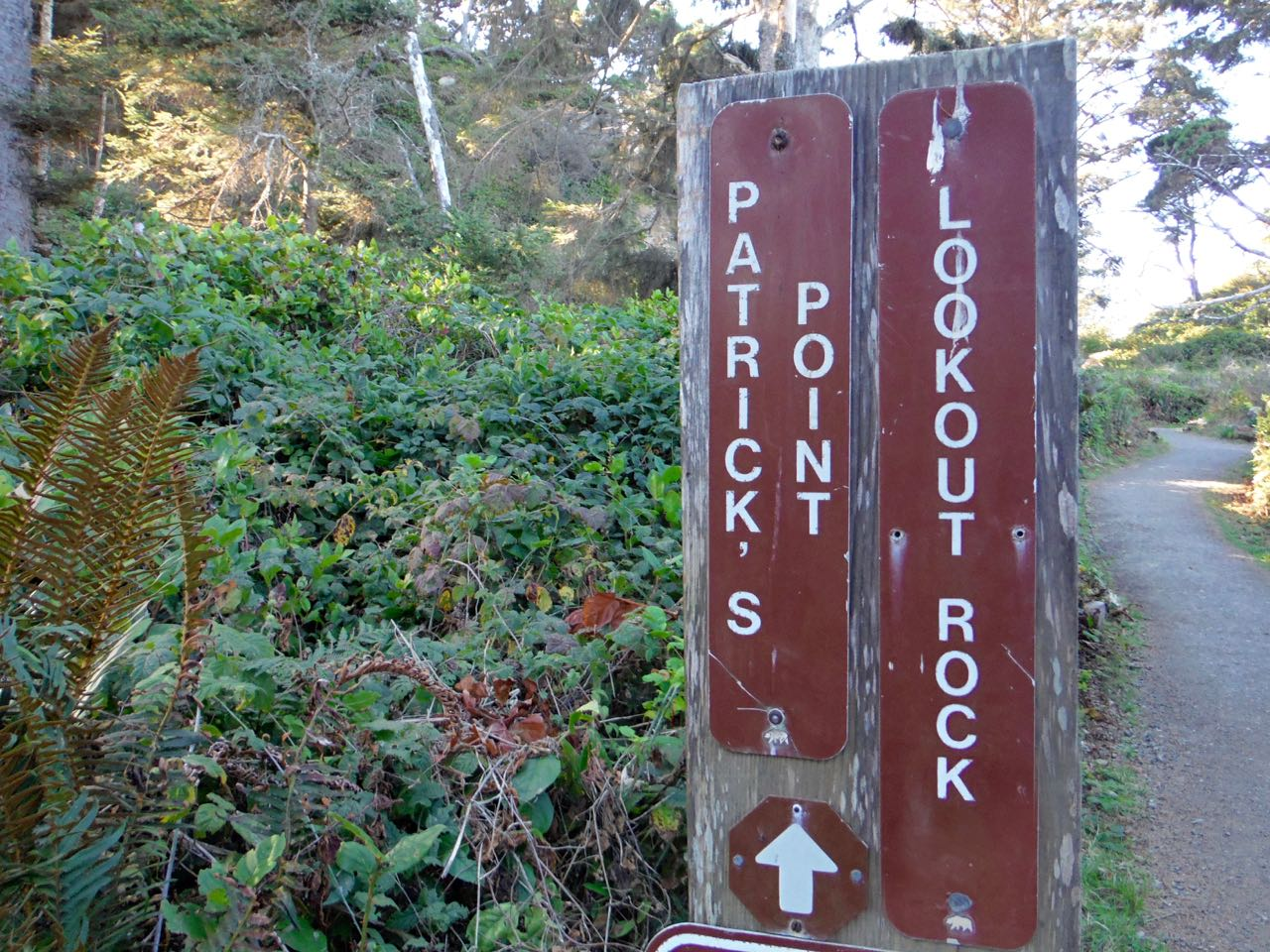 Redwoods 2017 10 01 89 Of 244