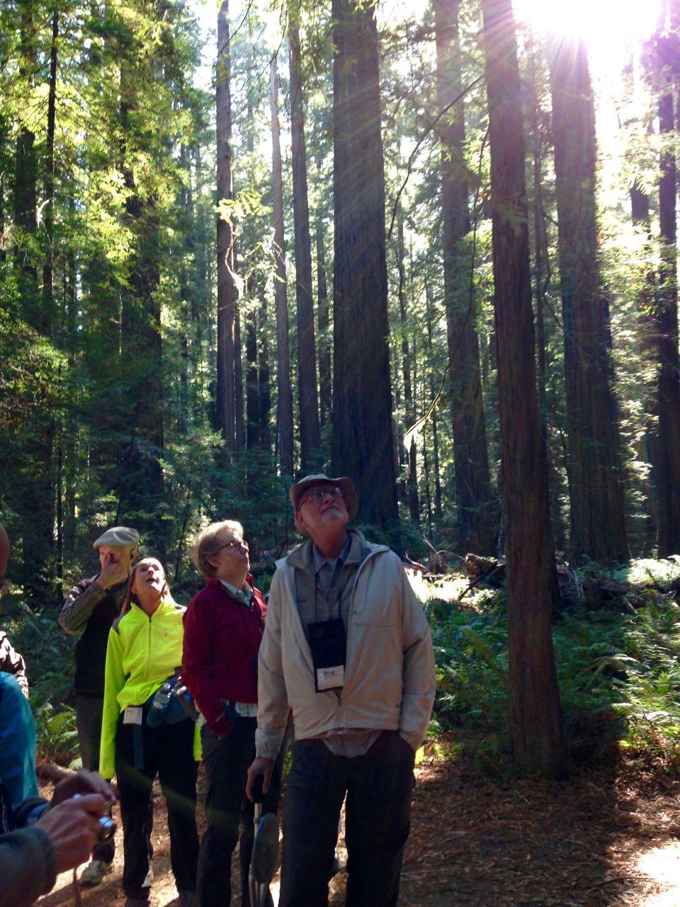 Redwoods 2017 10 01 9 Of 244