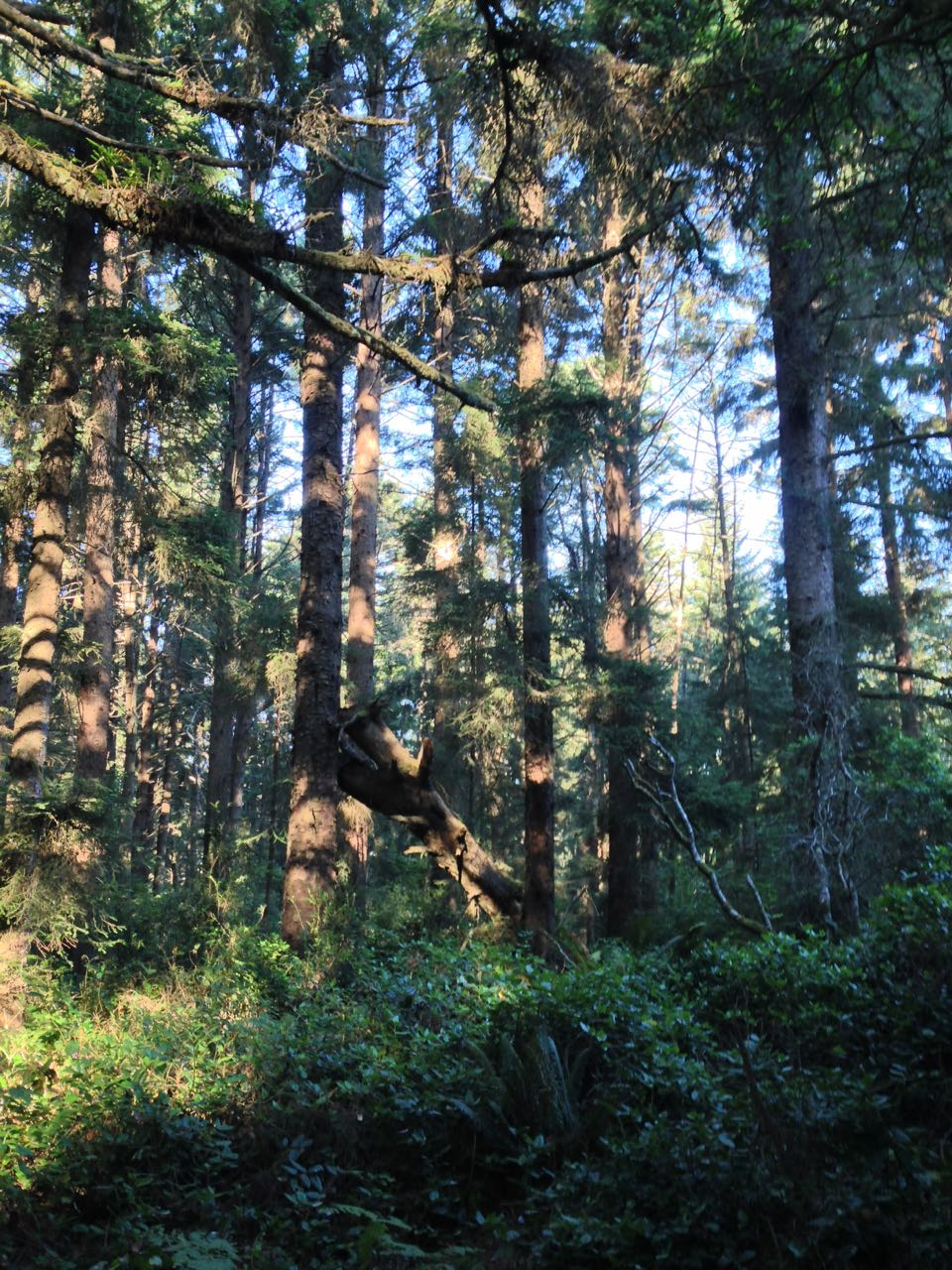 Redwoods 2017 10 01 90 Of 244