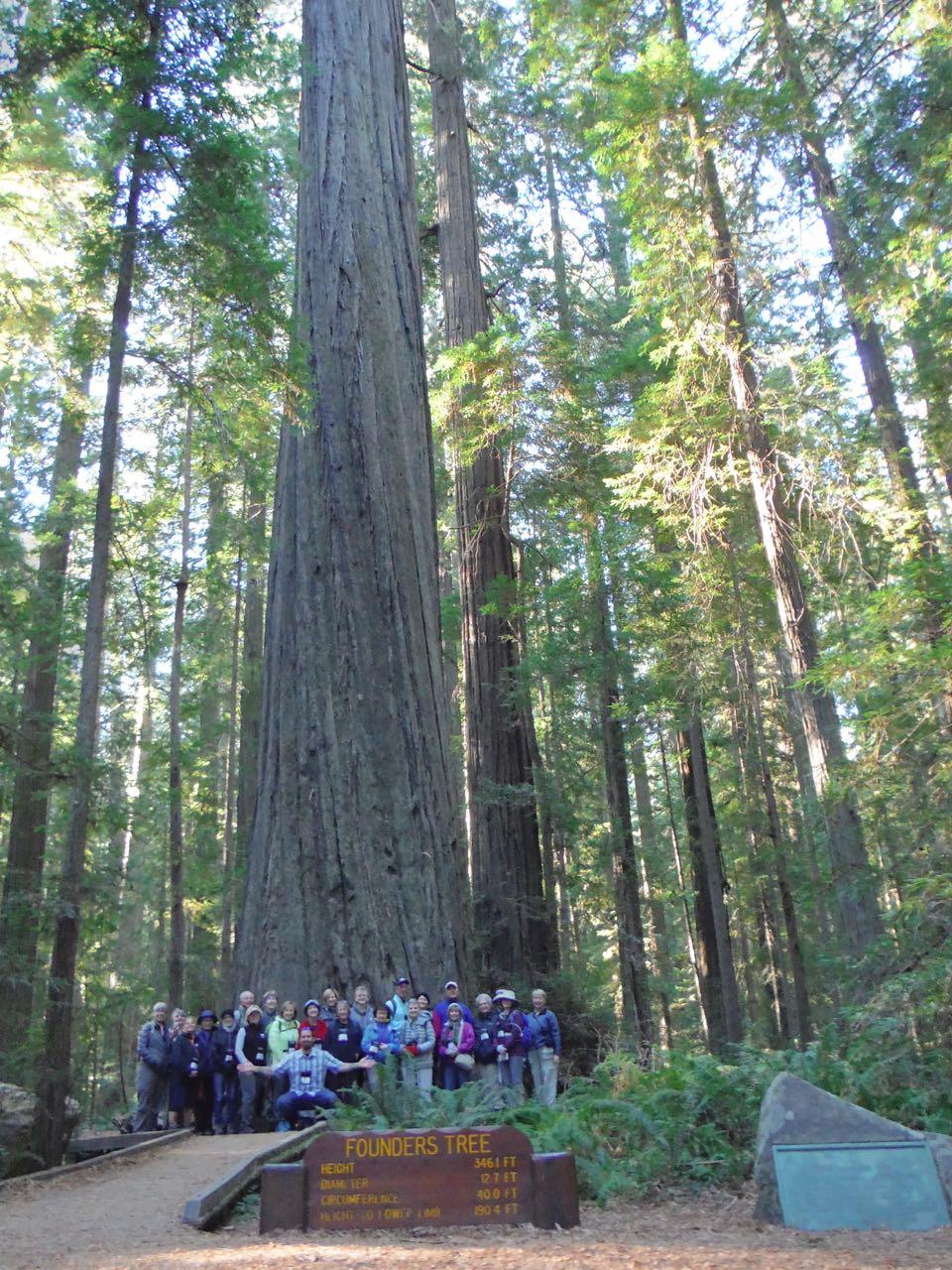 Redwoods 2017 10 08 1 Of 287