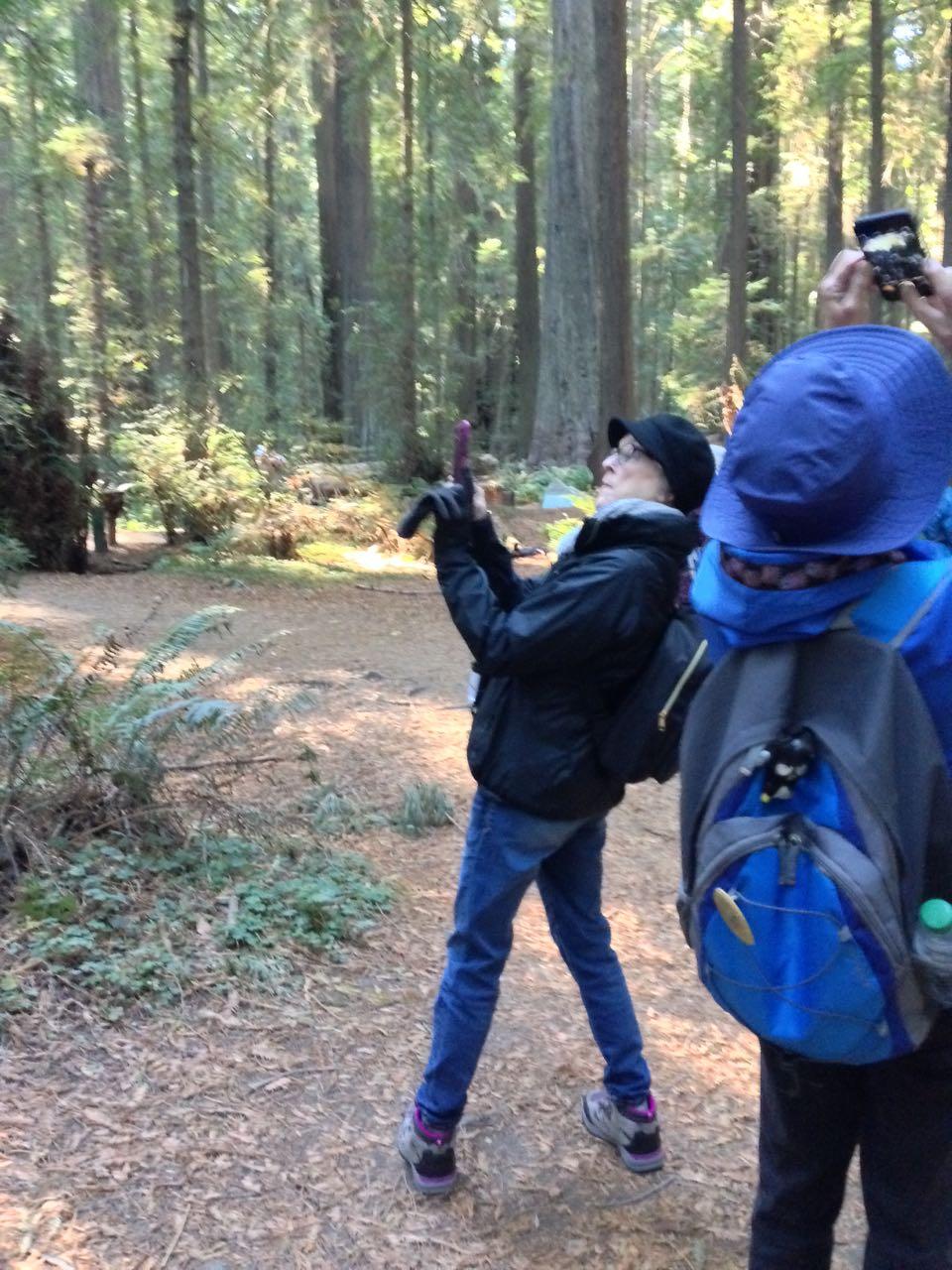 Redwoods 2017 10 08 10 Of 287