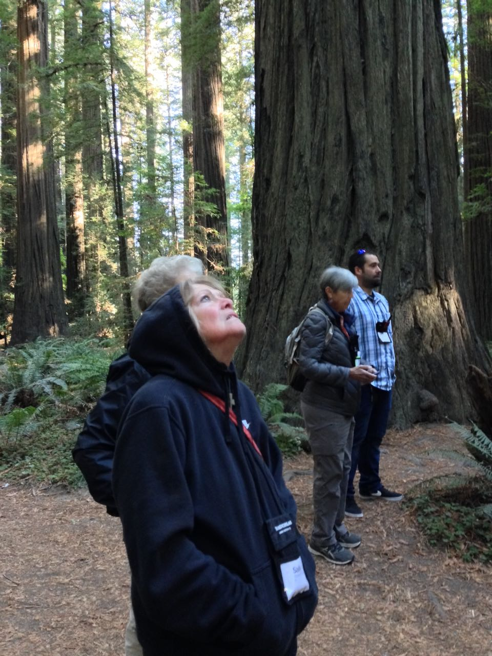 Redwoods 2017 10 08 11 Of 287