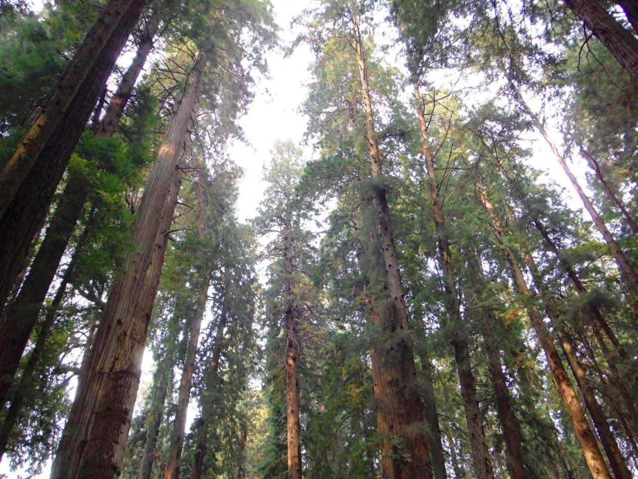 Redwoods 2017 10 08 112 Of 287