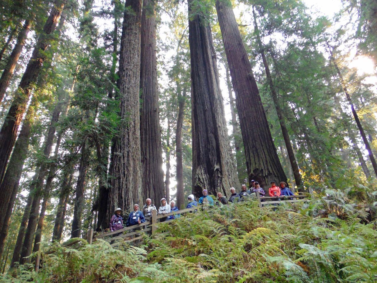 Redwoods 2017 10 08 113 Of 287