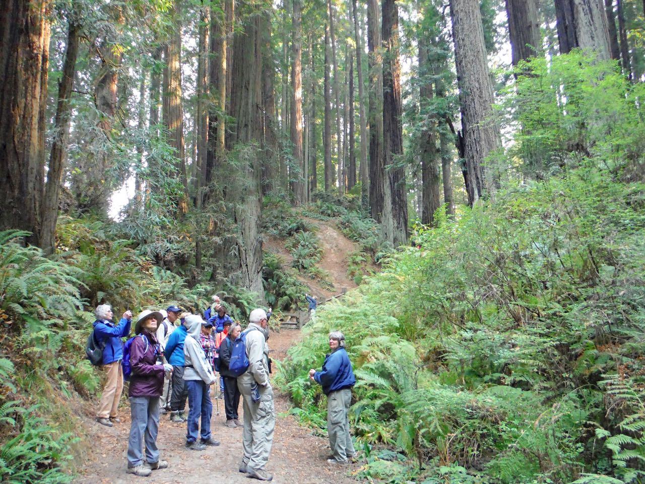 Redwoods 2017 10 08 115 Of 287
