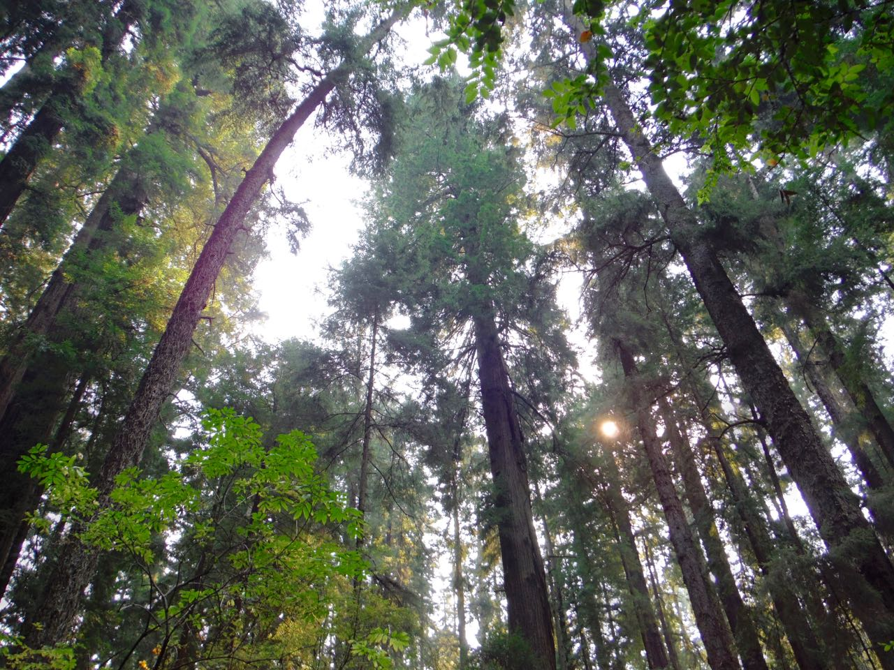 Redwoods 2017 10 08 116 Of 287