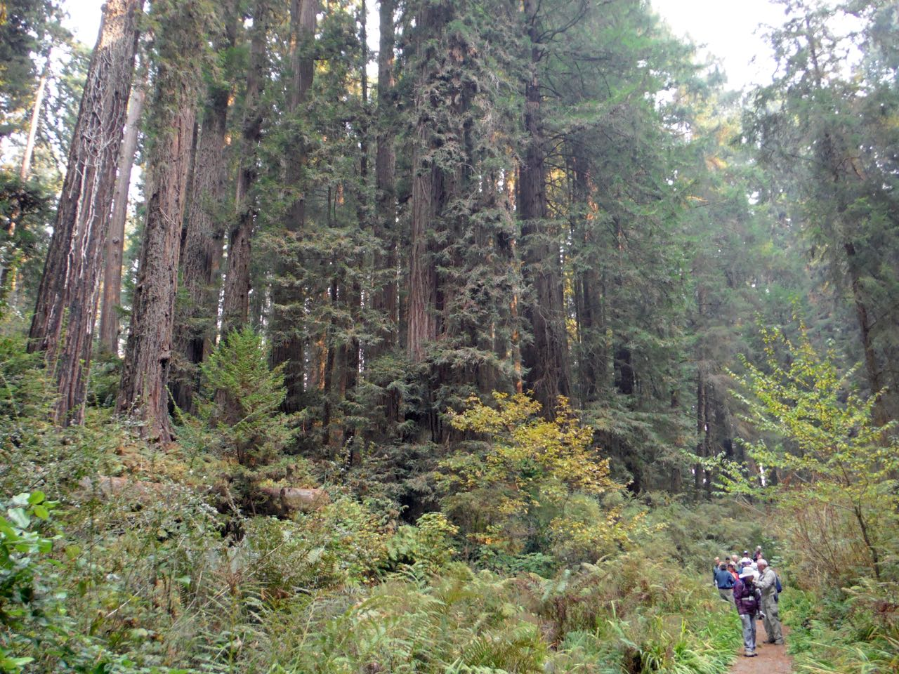 Redwoods 2017 10 08 119 Of 287