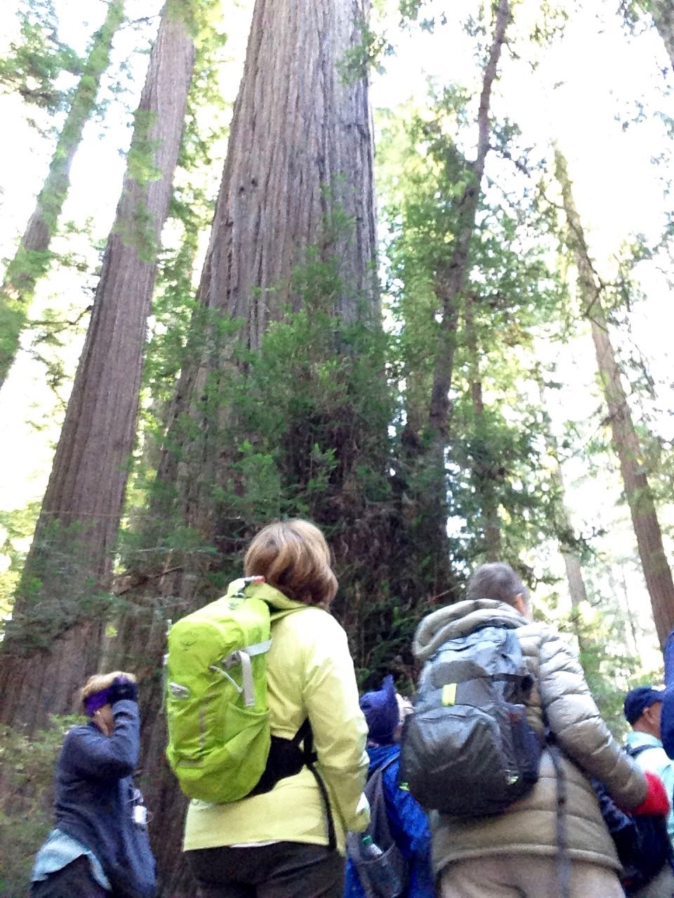 Redwoods 2017 10 08 12 Of 287