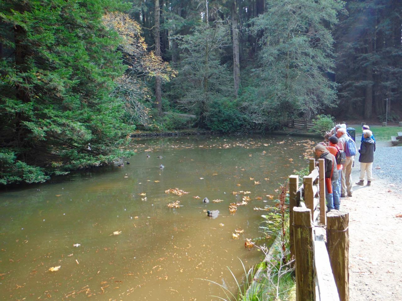 Redwoods 2017 10 08 121 Of 287