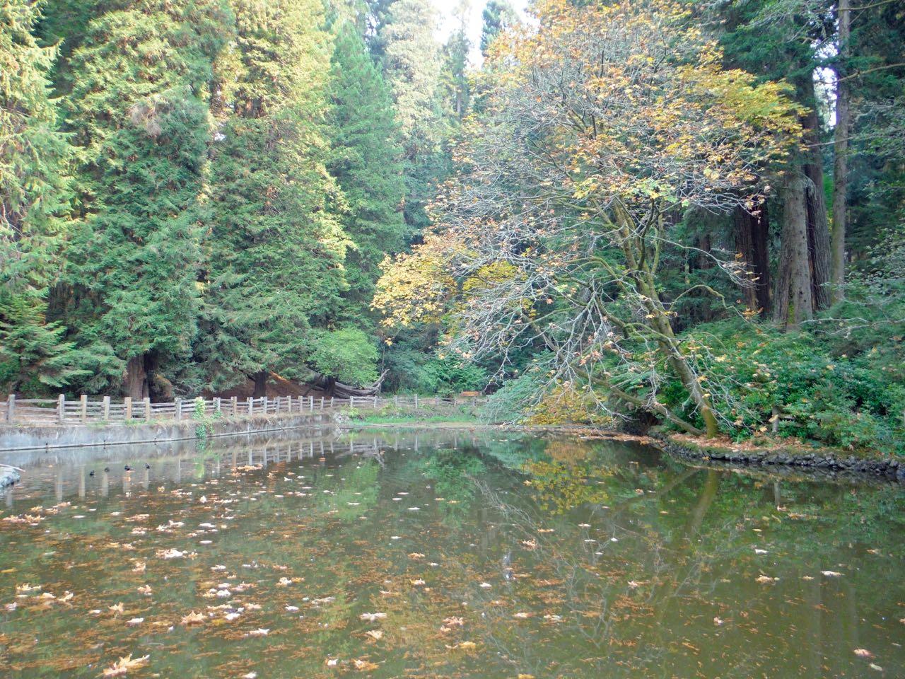 Redwoods 2017 10 08 122 Of 287