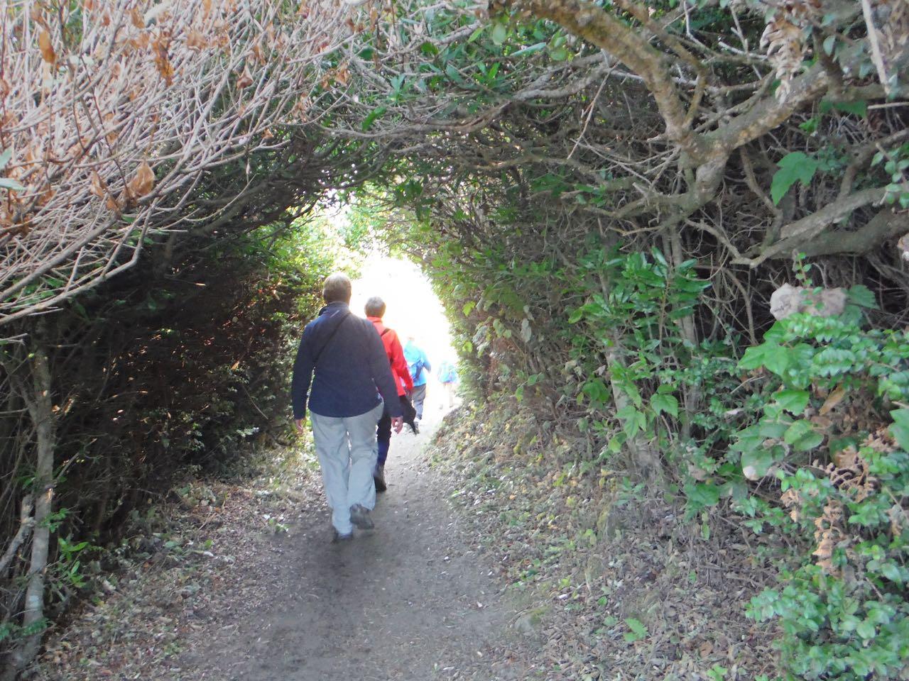 Redwoods 2017 10 08 157 Of 287