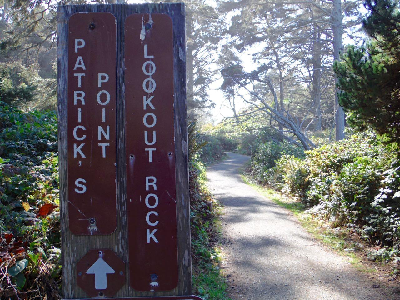 Redwoods 2017 10 08 164 Of 287