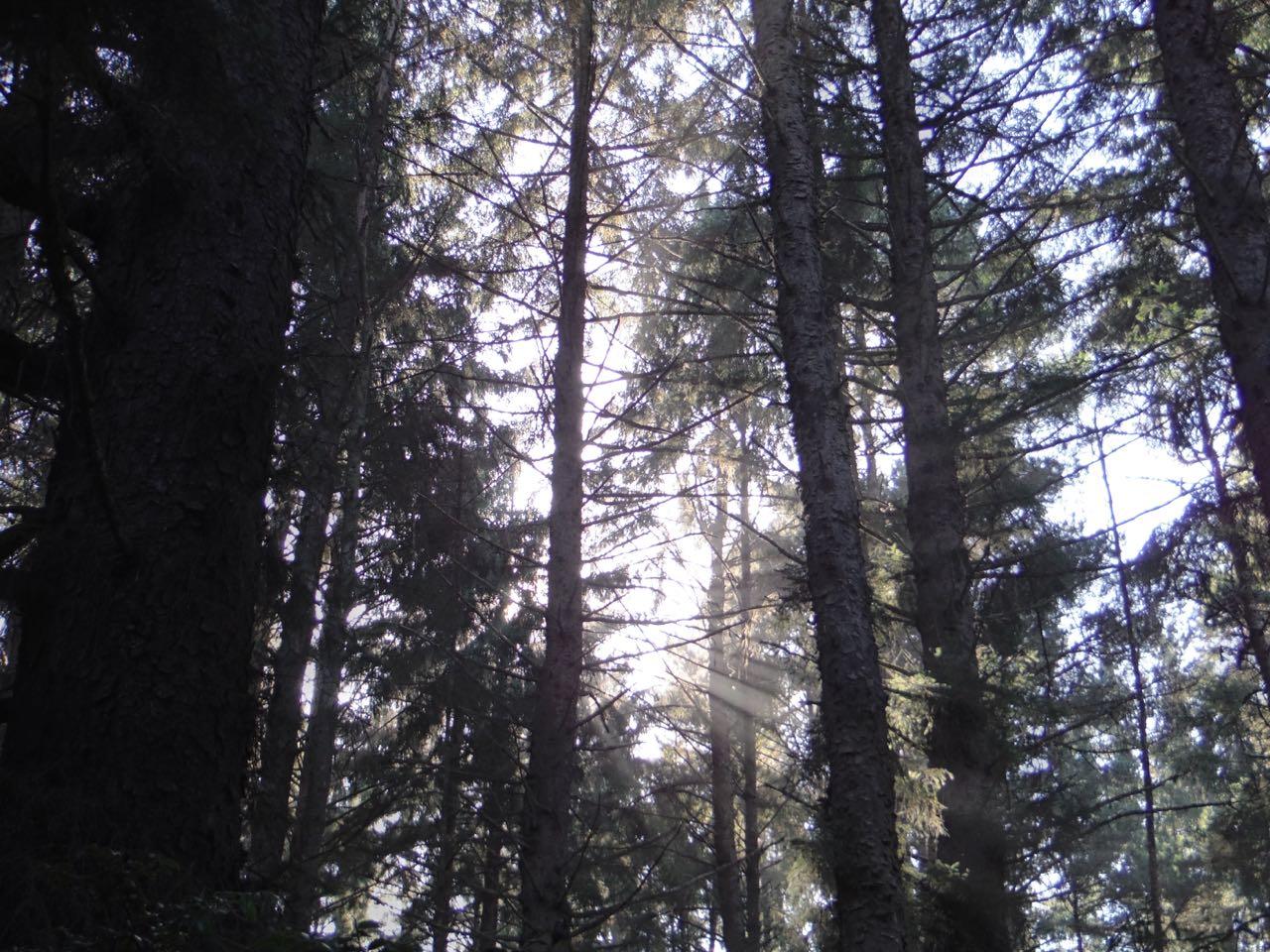 Redwoods 2017 10 08 165 Of 287