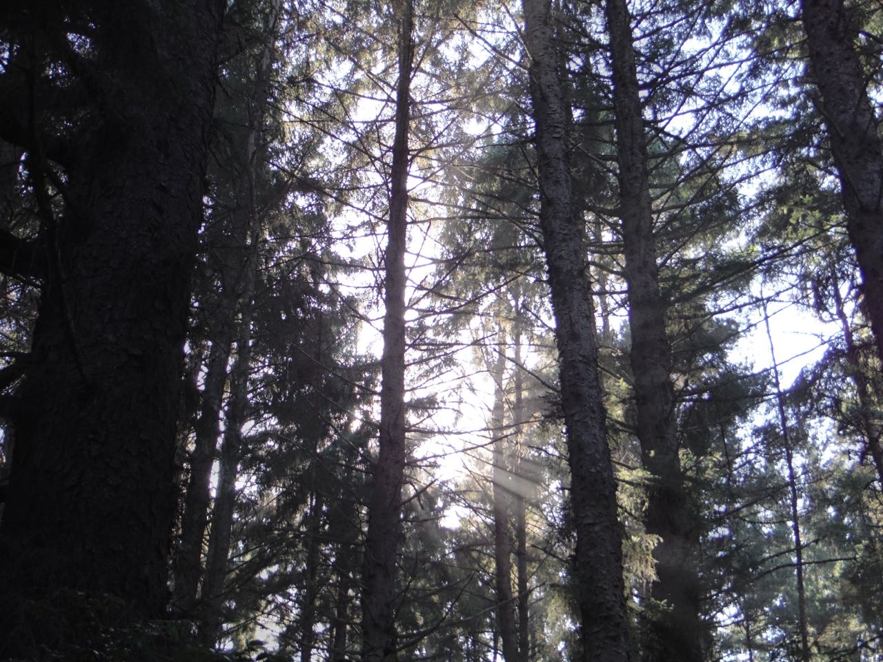 Redwoods 2017 10 08 165 Of 287