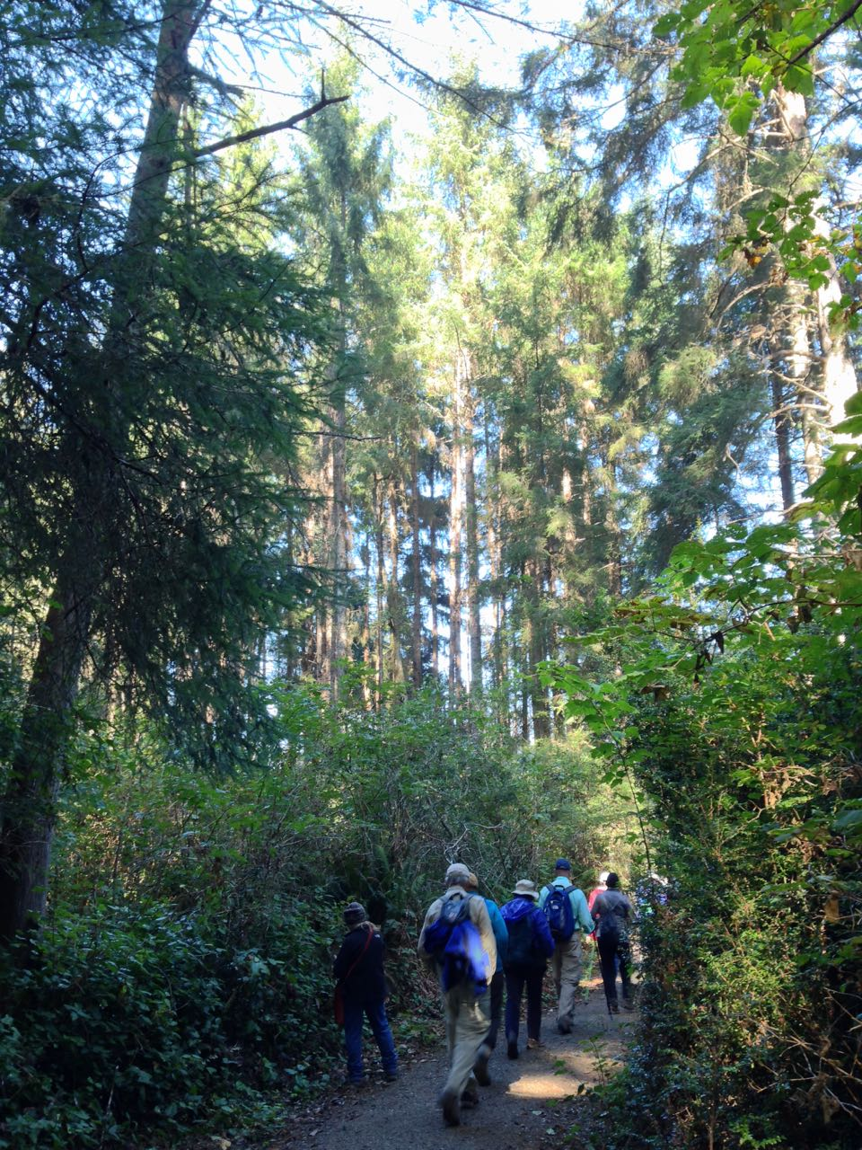 Redwoods 2017 10 08 166 Of 287