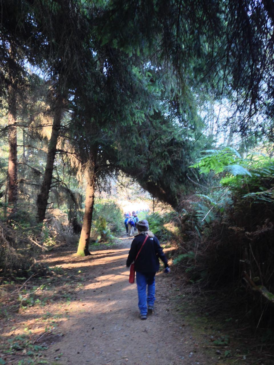 Redwoods 2017 10 08 167 Of 287