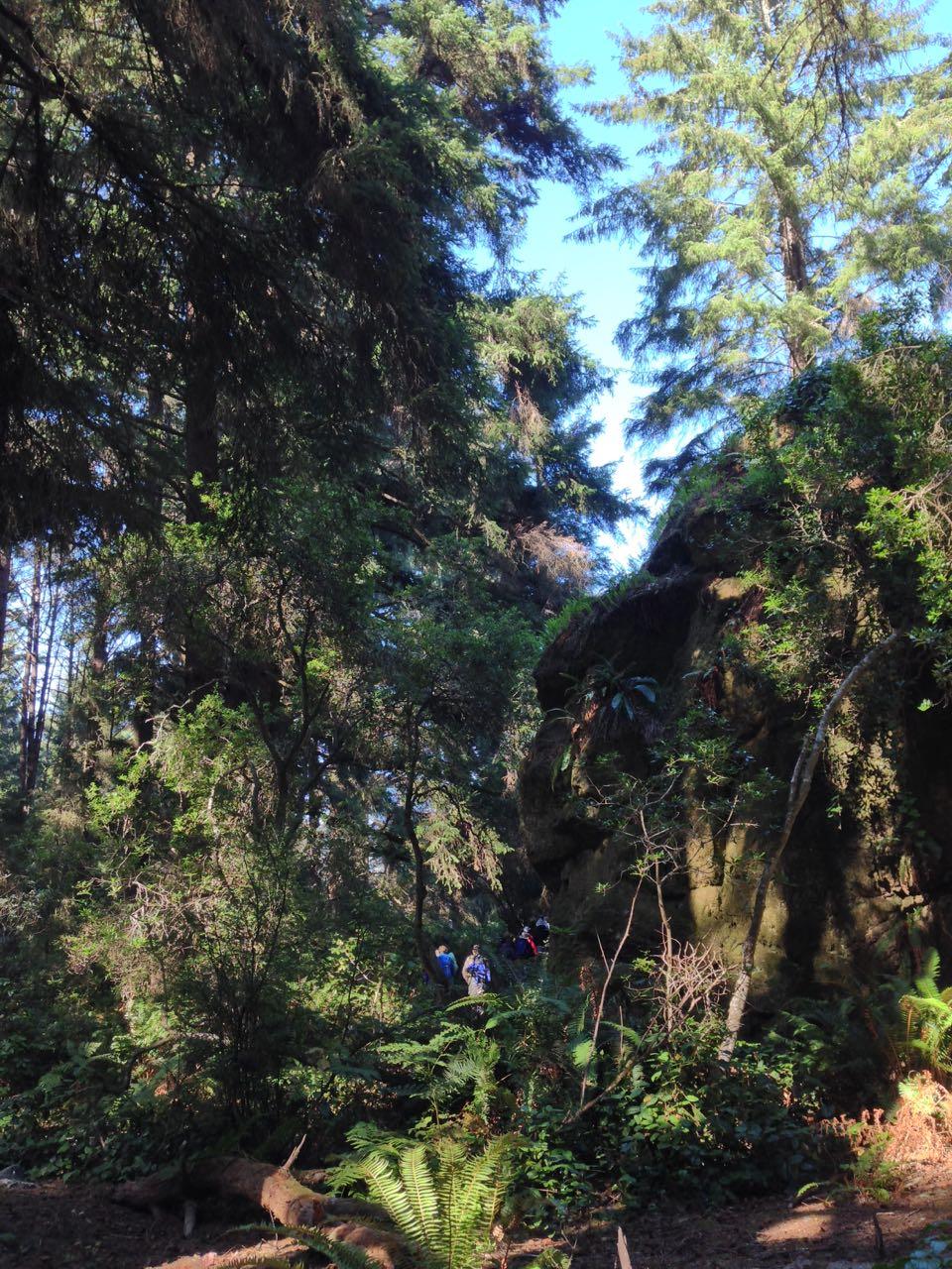 Redwoods 2017 10 08 168 Of 287