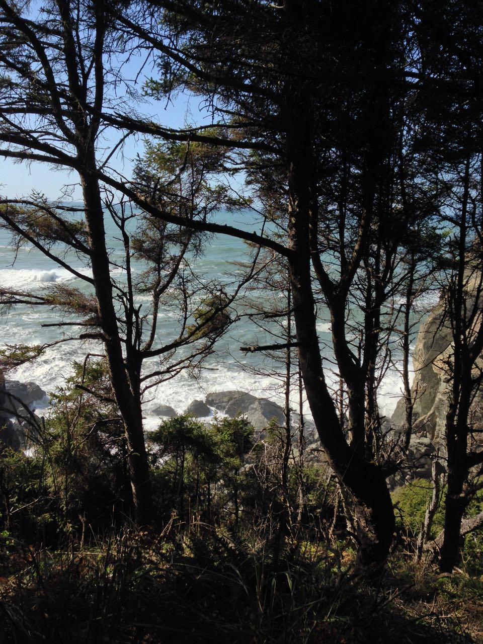 Redwoods 2017 10 08 170 Of 287
