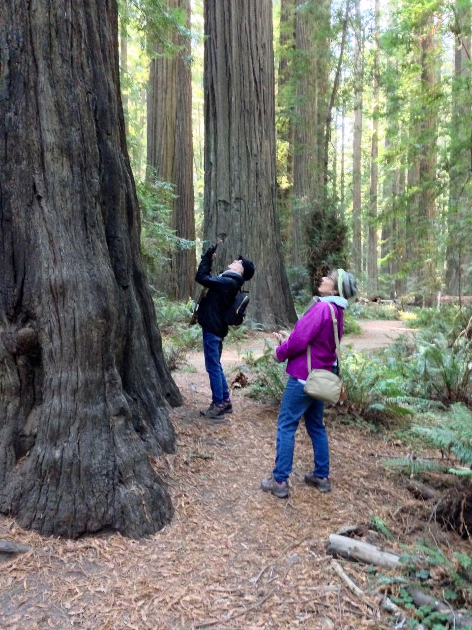 Redwoods 2017 10 08 18 Of 287