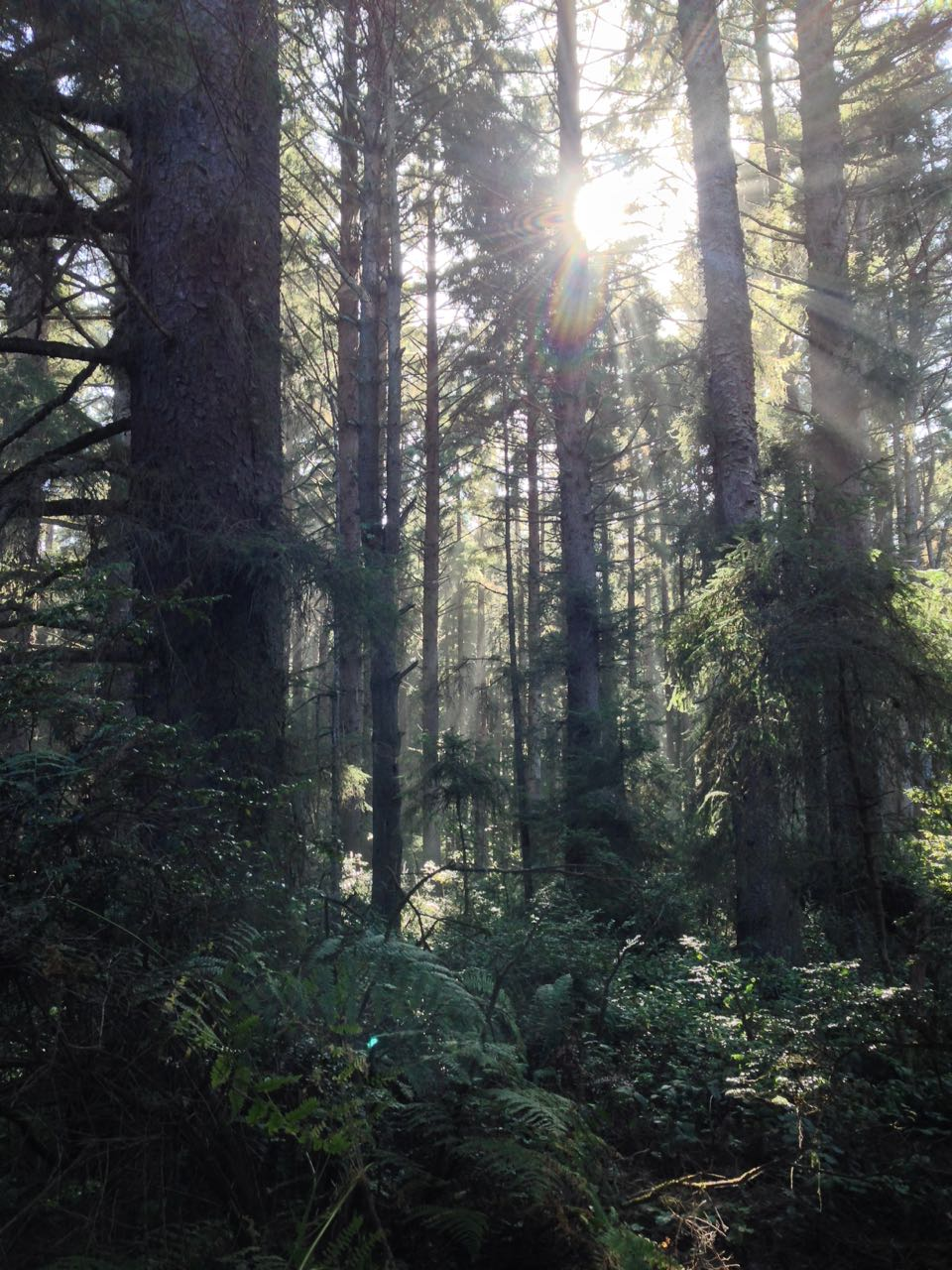Redwoods 2017 10 08 189 Of 287