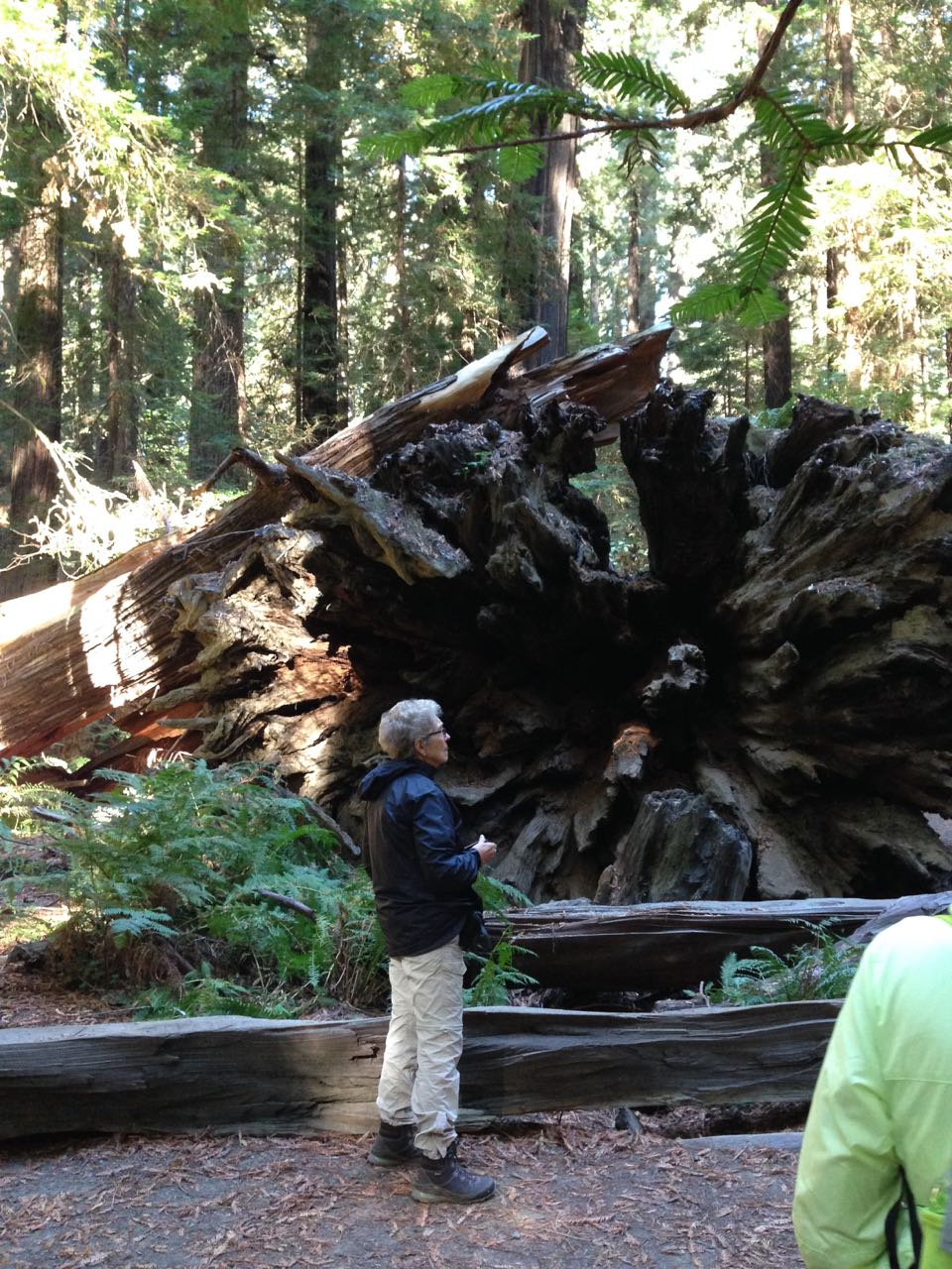 Redwoods 2017 10 08 19 Of 287