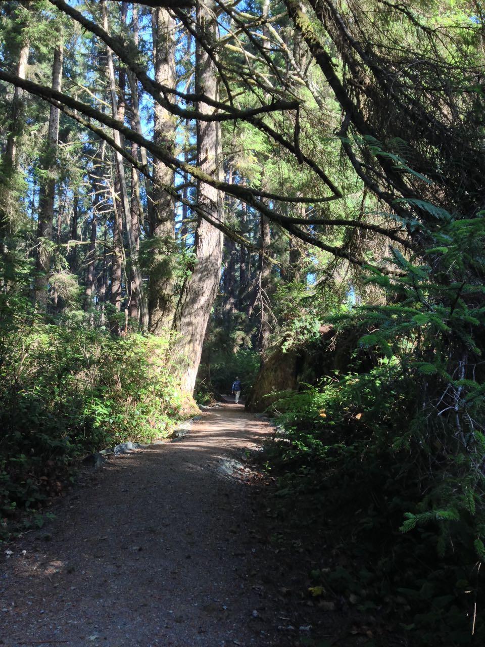 Redwoods 2017 10 08 190 Of 287