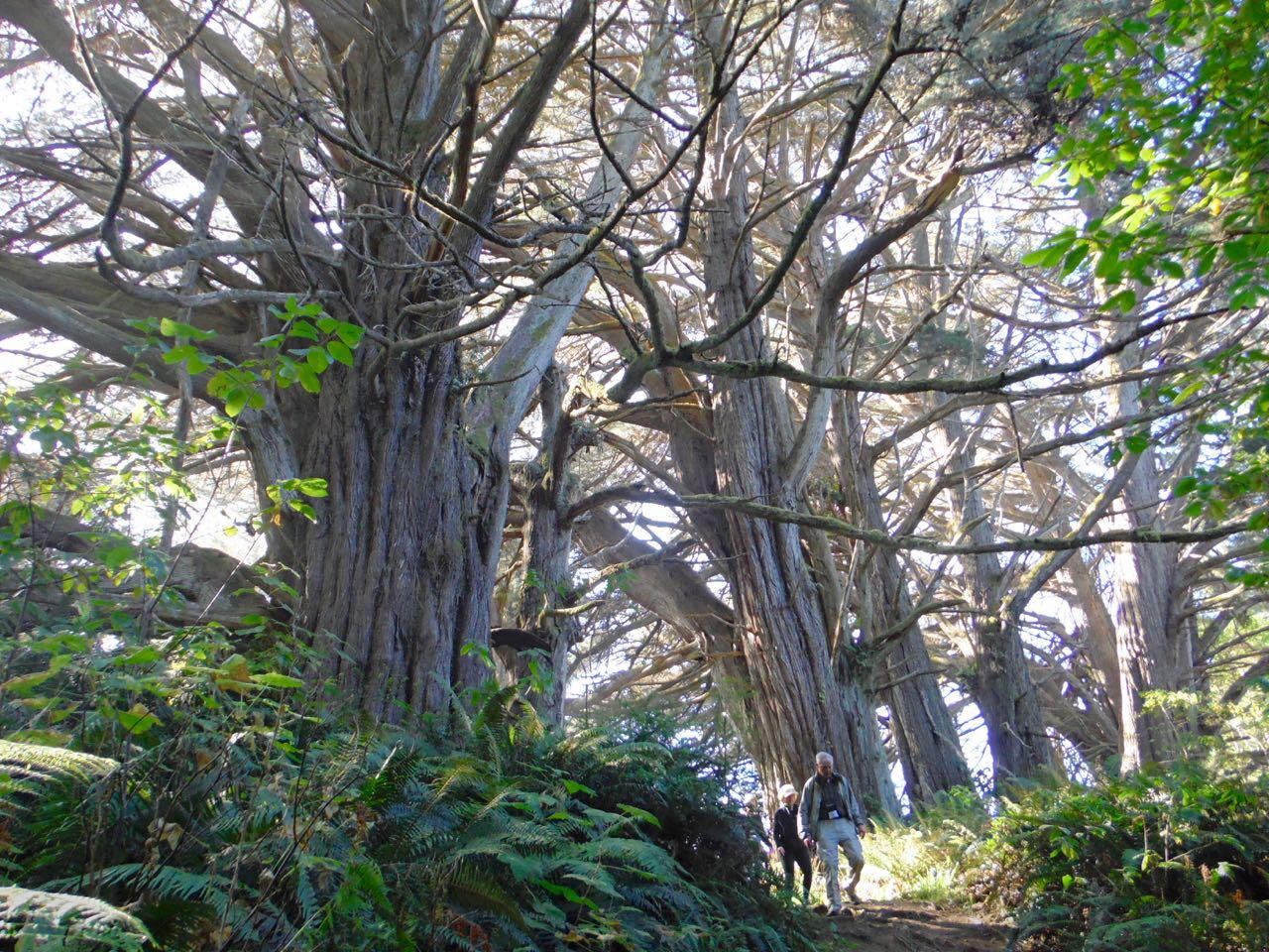 Redwoods 2017 10 08 191 Of 287