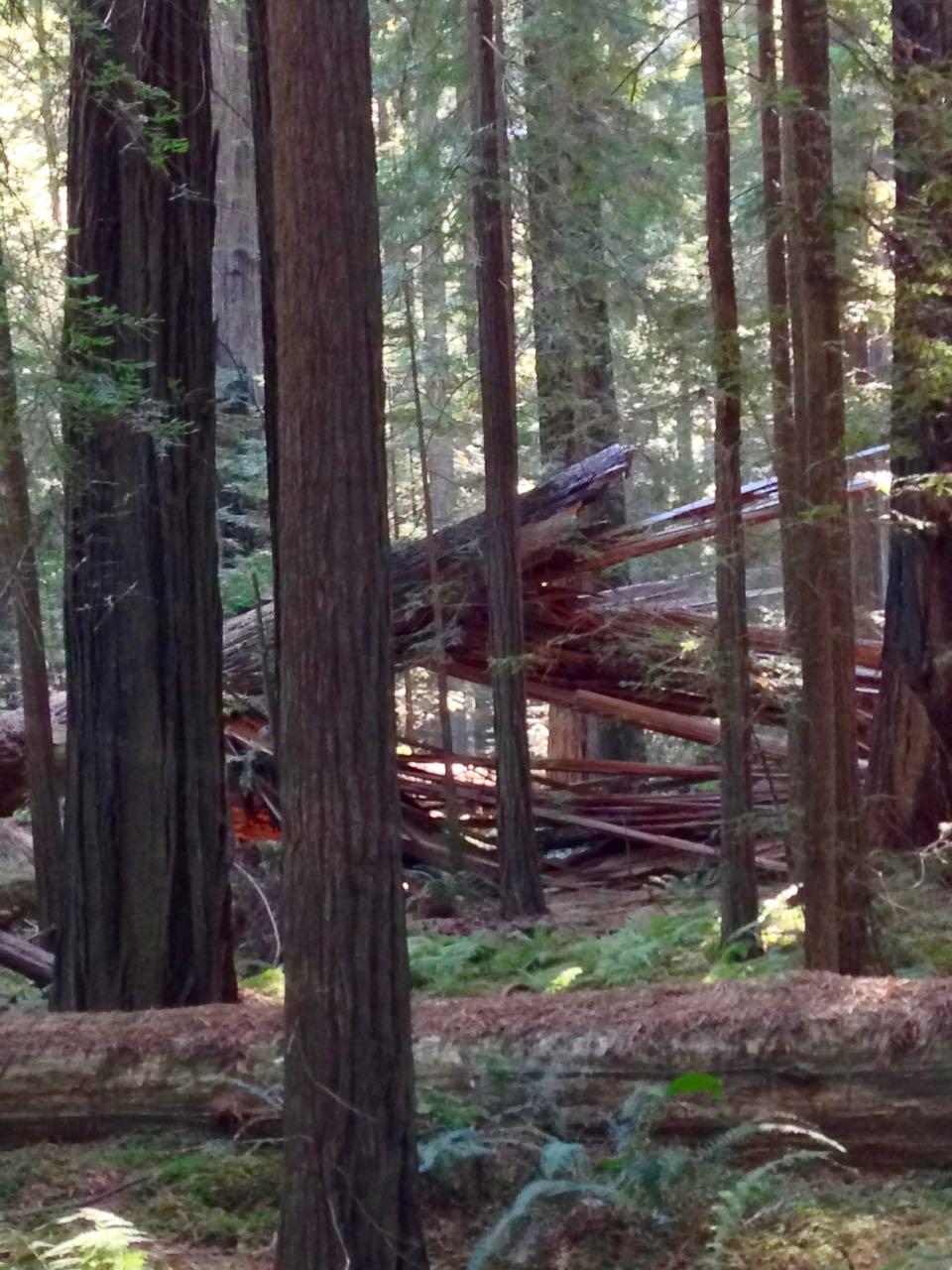 Redwoods 2017 10 08 20 Of 287