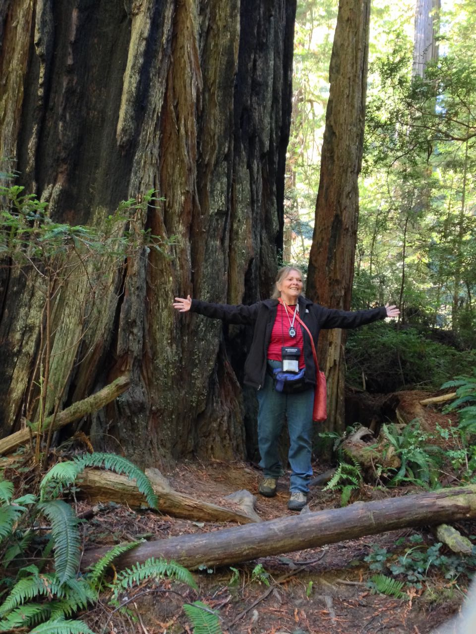 Redwoods 2017 10 08 212 Of 287