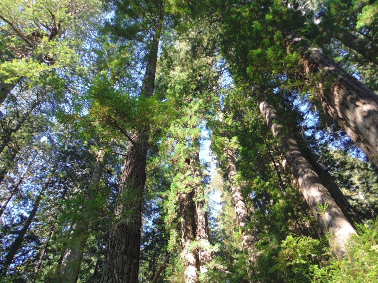 Redwoods 2017 10 08 213 Of 287