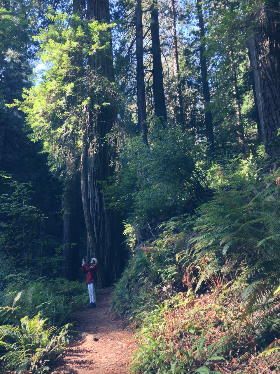Redwoods 2017 10 08 214 Of 287
