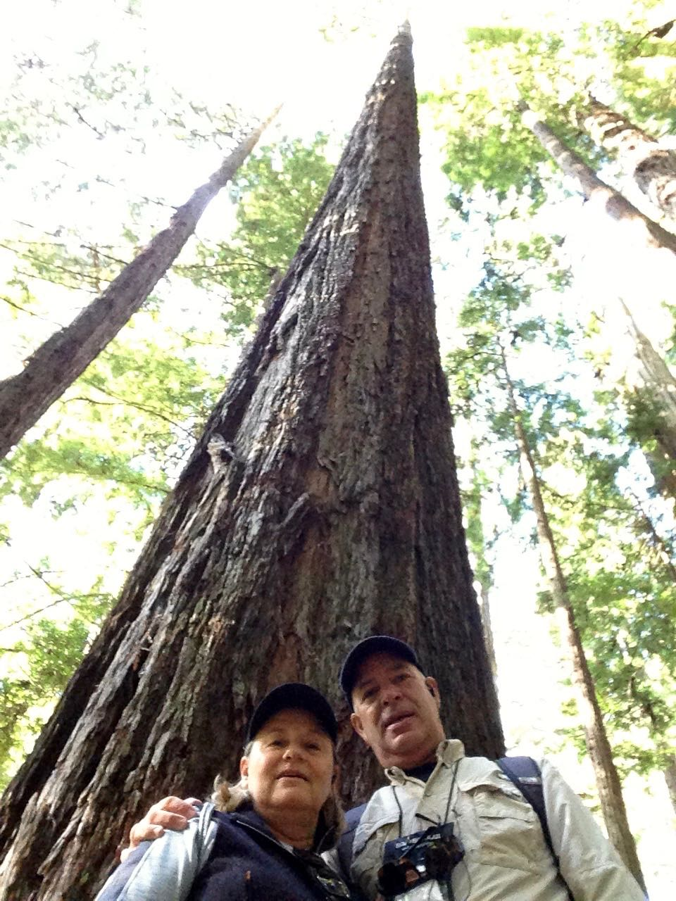 Redwoods 2017 10 08 215 Of 287