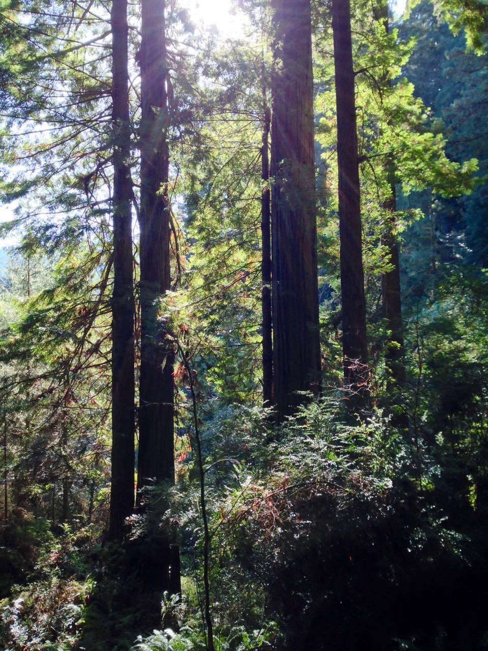 Redwoods 2017 10 08 216 Of 287