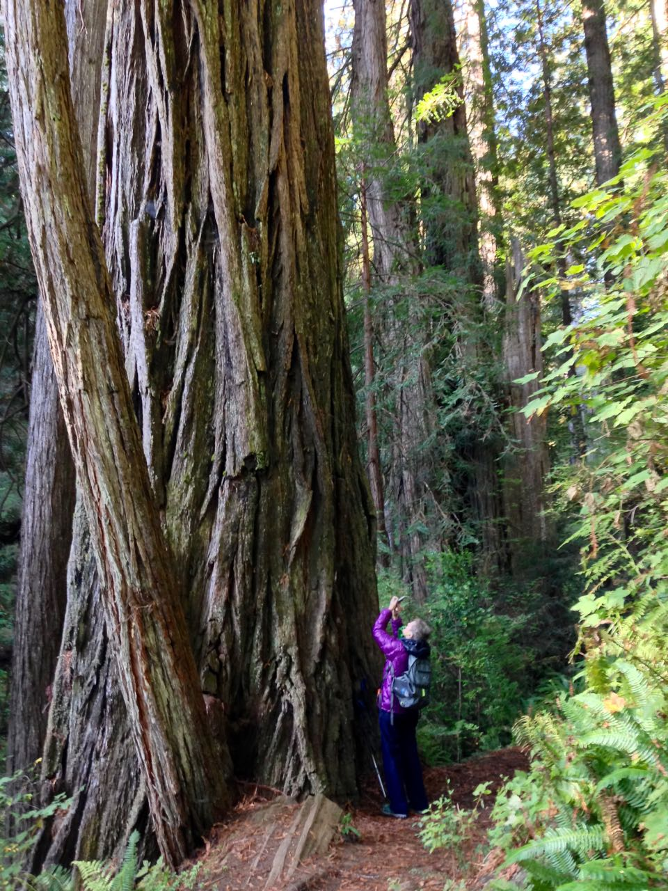 Redwoods 2017 10 08 217 Of 287