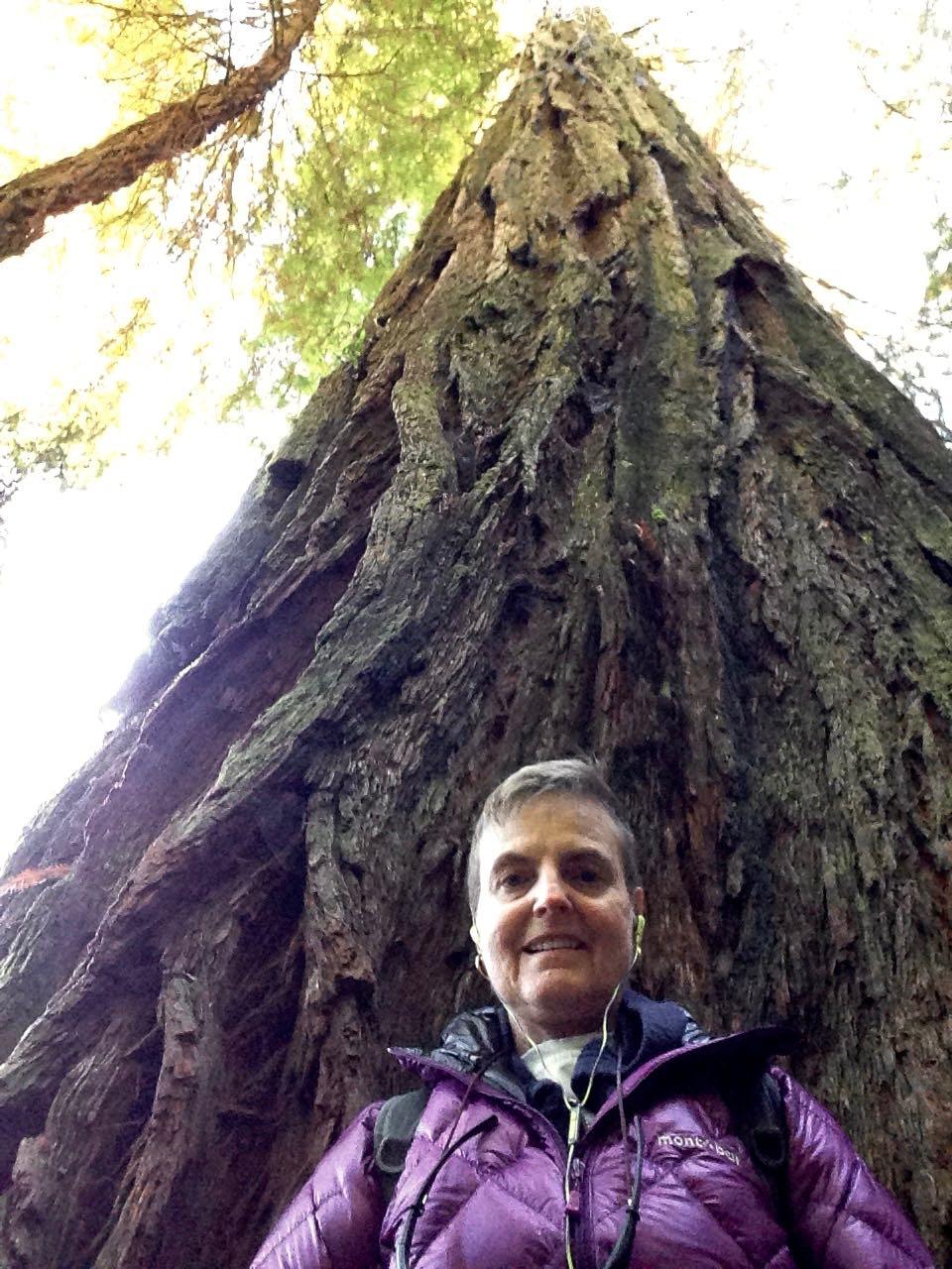 Redwoods 2017 10 08 218 Of 287