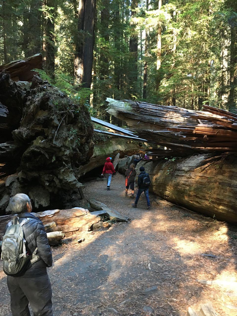 Redwoods 2017 10 08 22 Of 287