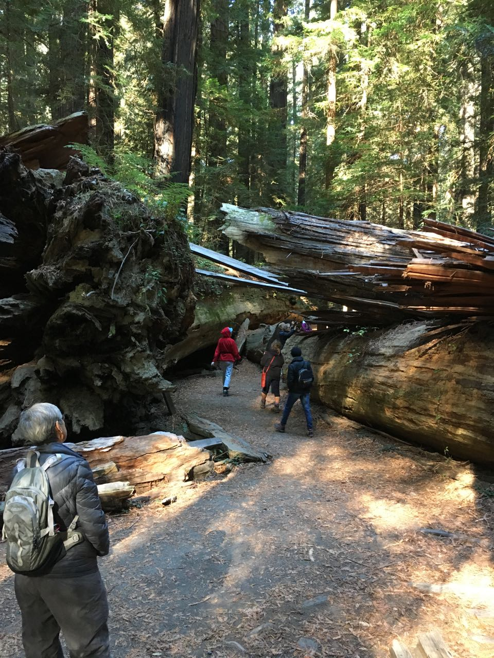 Redwoods 2017 10 08 22 Of 287