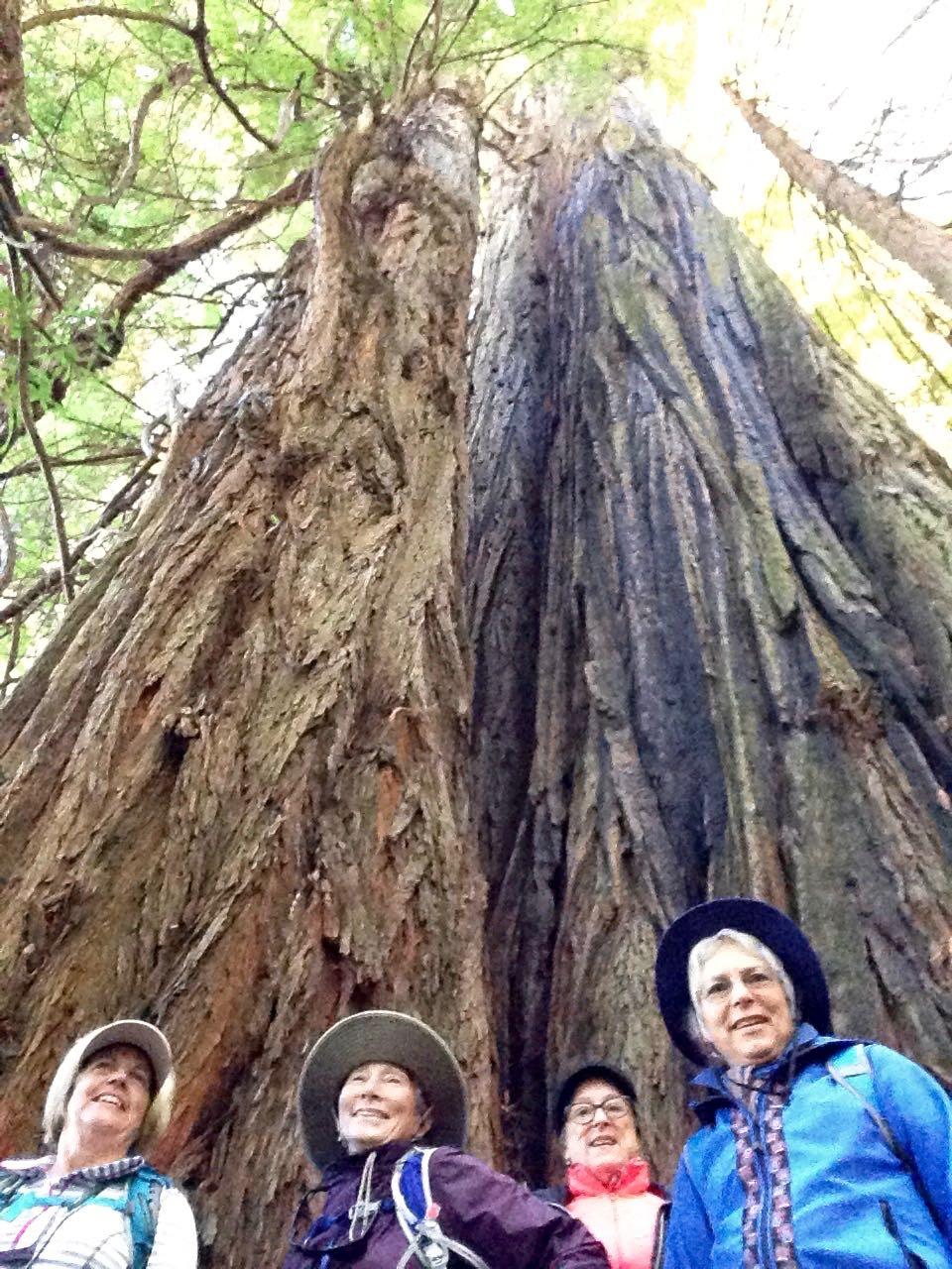 Redwoods 2017 10 08 220 Of 287