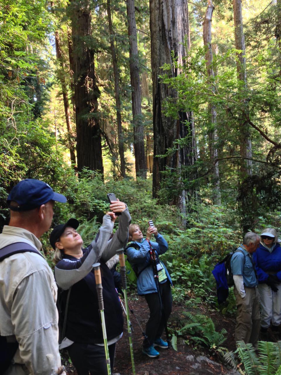 Redwoods 2017 10 08 222 Of 287
