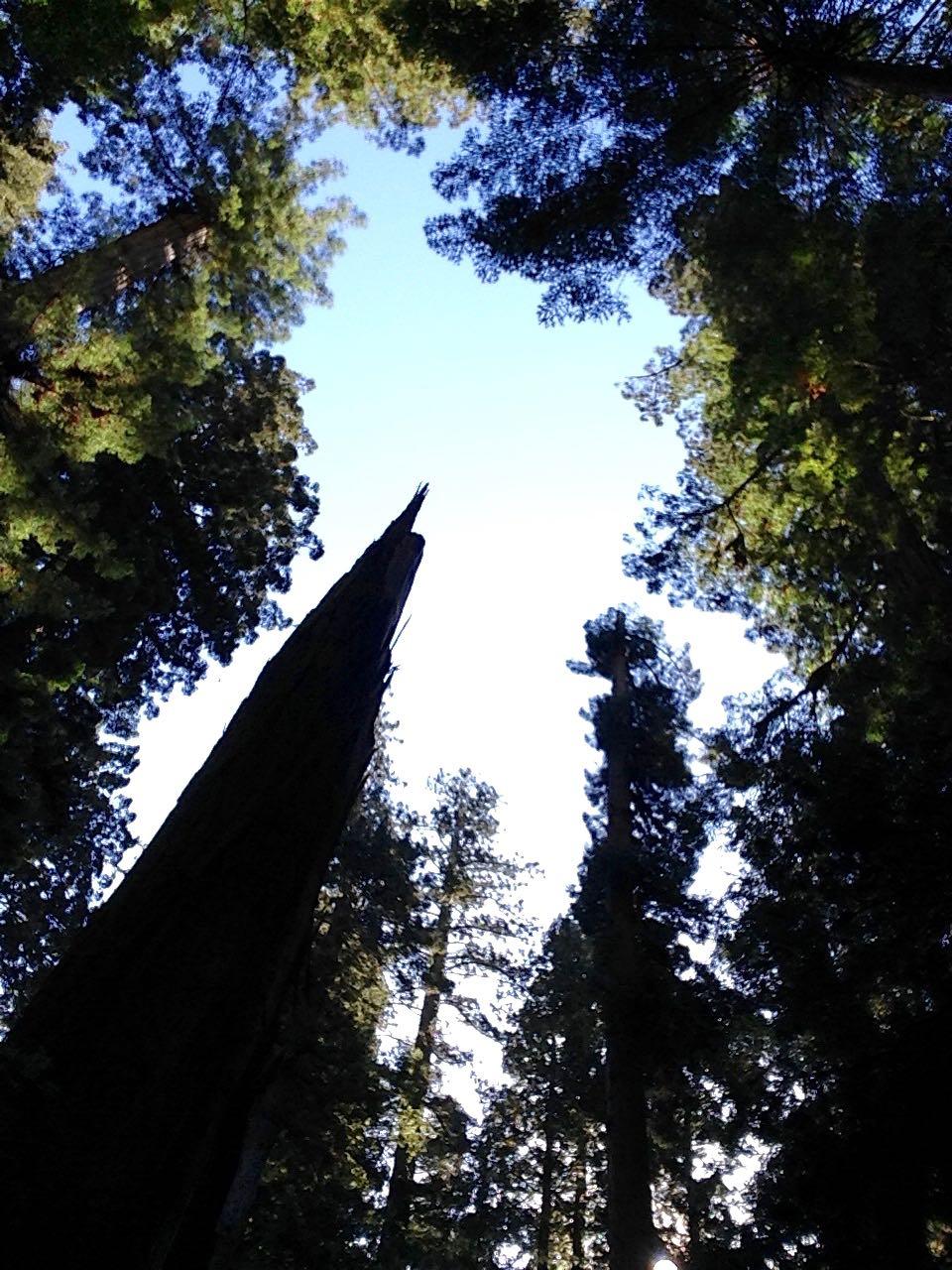 Redwoods 2017 10 08 223 Of 287