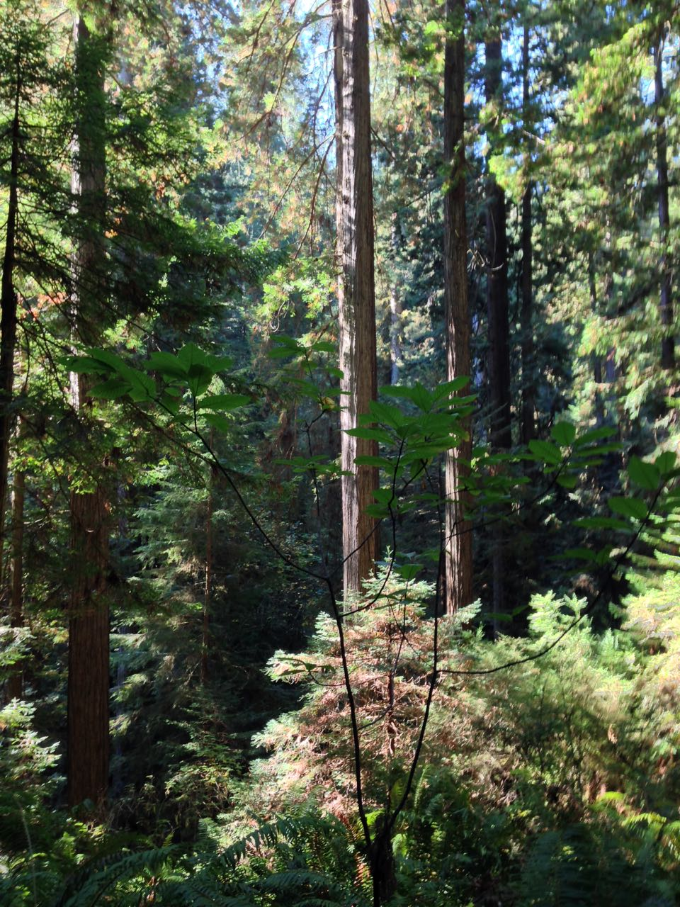 Redwoods 2017 10 08 224 Of 287