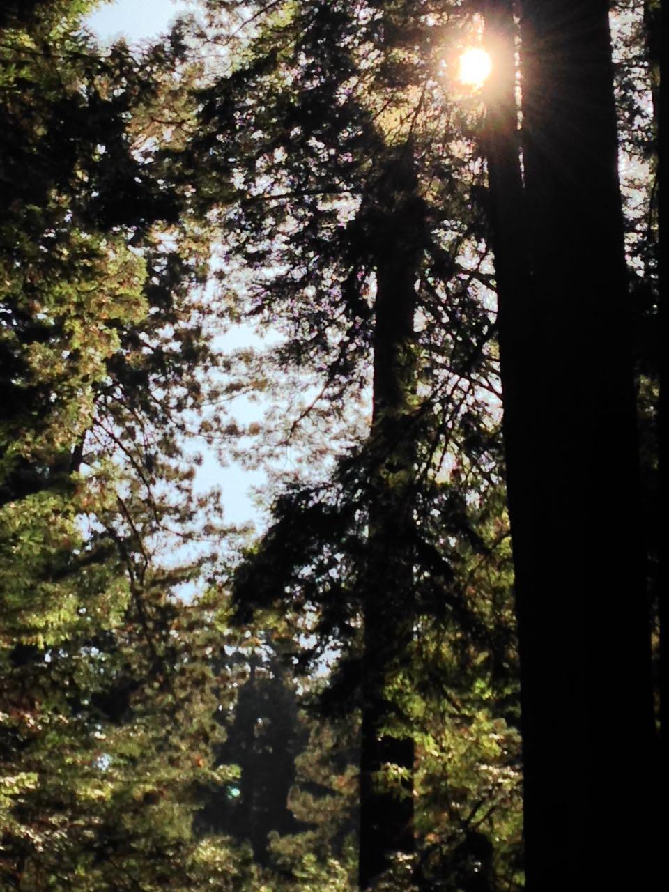 Redwoods 2017 10 08 226 Of 287