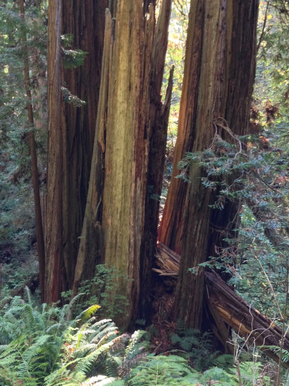 Redwoods 2017 10 08 227 Of 287