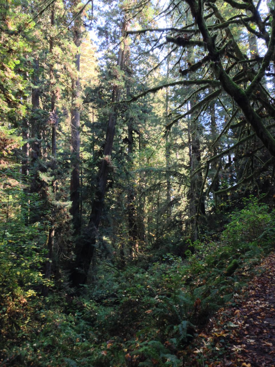 Redwoods 2017 10 08 229 Of 287